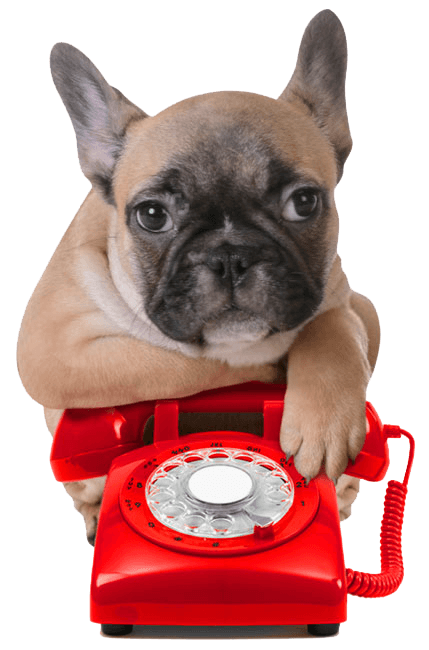 Call Teacup Pups!