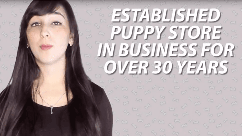 The Truth About Puppy Stores